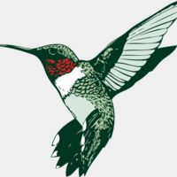 Hummingbirds Thumbnail